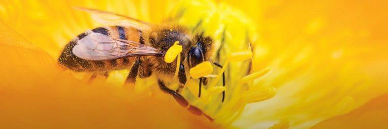 Odprtje čebelarske poti